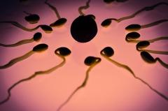 絕子絕孫?西方男性精蟲密度40年驟降一半
