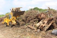 嘉義市成立木材平台 廢棄樹幹等待新生