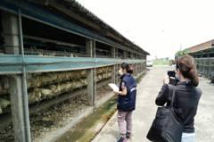 毒雞蛋風暴 彰化縣已有4家解除列管恢復上市