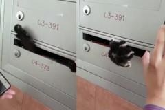 黑貓受困信箱 新加坡搶救喵星人大作戰