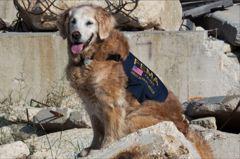 為絕望的人們帶來希望 德州豎立911搜救犬布列塔尼銅像
