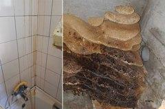 浴室天花板流深黃色液體 拆開後網友驚:賺翻了