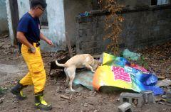 台南2搜救犬通過檢測 擇期授階後正式服勤