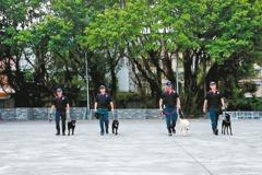 中市警犬隊受訓 明年投入花博勤務