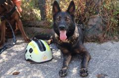 高雄氣爆、台南地震都有「她」 搜救犬退役找新家