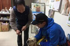 惜惜!統帥立功搜救犬「鐵雄」不堪災區濕冷 右耳發炎