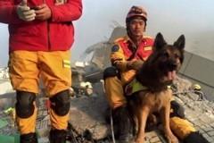 那美好的仗已打過 這5隻英雄犬寫進救災史