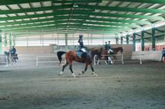 高雄市觀光騎警隊馬術檢定晉級 騎術更上一層樓