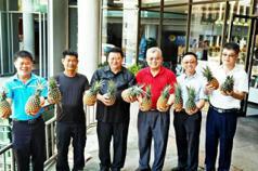 國內鳳梨滯銷 黃健庭跑到福建省賣500噸鳳梨