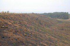 森林復育 最怕染病、火燒山