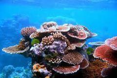 島上鼠患猖獗 導致珊瑚礁數量銳減