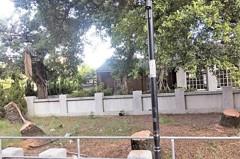 投訴/興賢書院椰影消失 6株80年椰子樹剩樹頭