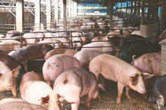 英政府:台灣準備開放英國豬肉進口