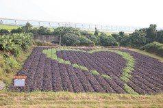 建築師轉職菜農 打造「愛妻田」