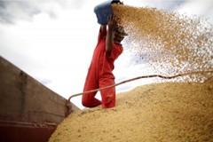 美農業部長帕度:中國大陸料將恢復美國大豆進口
