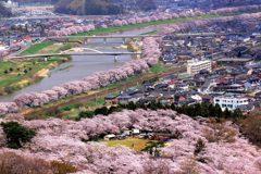 櫻花櫻花幾月開! 2019「日本櫻花」花期與賞櫻景點搶先看