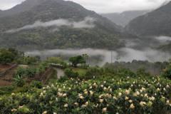 枇杷園登山健行 台中太平雨後山景映入眼簾