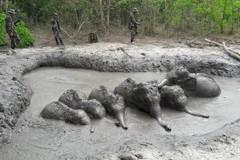 影/6頭幼象困泥坑 泰國家公園巡護員挖斜坡助脫身
