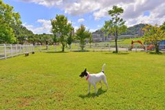 連假帶毛小孩出門 北市有5處運動公園及狗狗活動區設施