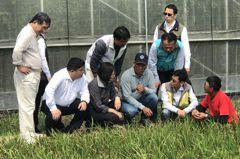 葉稻熱病稻作保險賠不賠?農民怨:理賠標準太高了