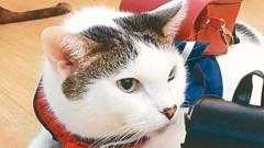 家犬貓成長速度驚人 大學寵物課程正夯
