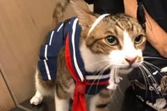 影/全台「貓奴」大增 假日寵物課正夯