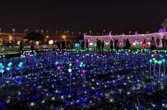 加碼15天!新北蝴蝶光雕展延至6月2日 50萬顆LED打造浪漫夜景