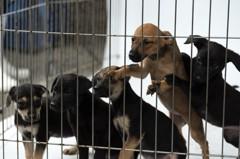 不滿被說黑箱! 獸醫師公會全聯會發聲明表達抗議