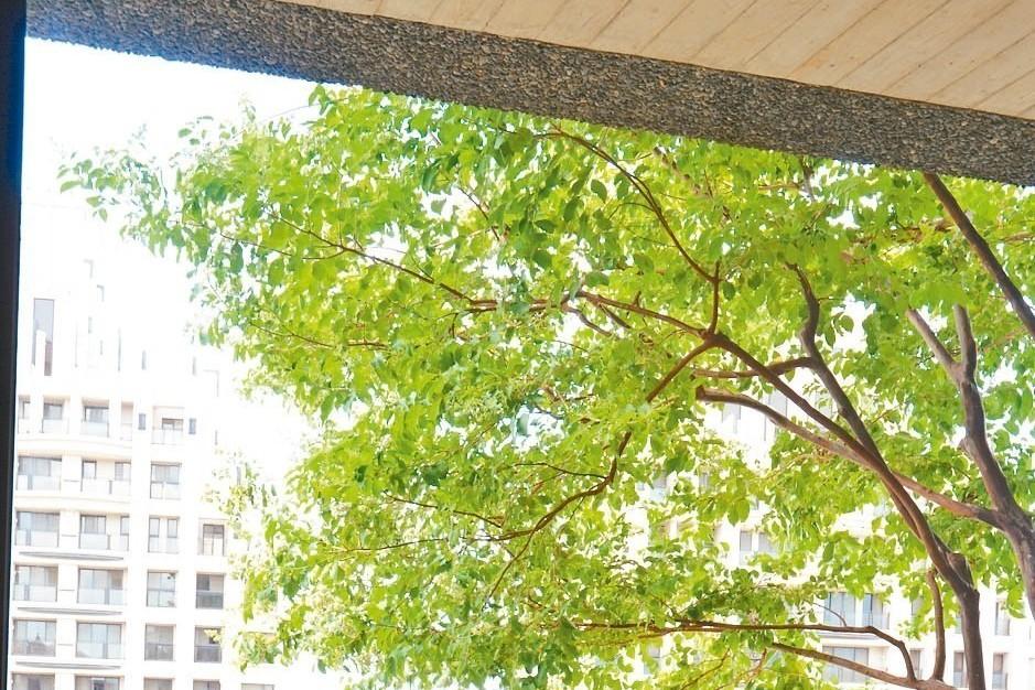 熱島效應尋解方…綠屋頂革命 八年推動仍牛步