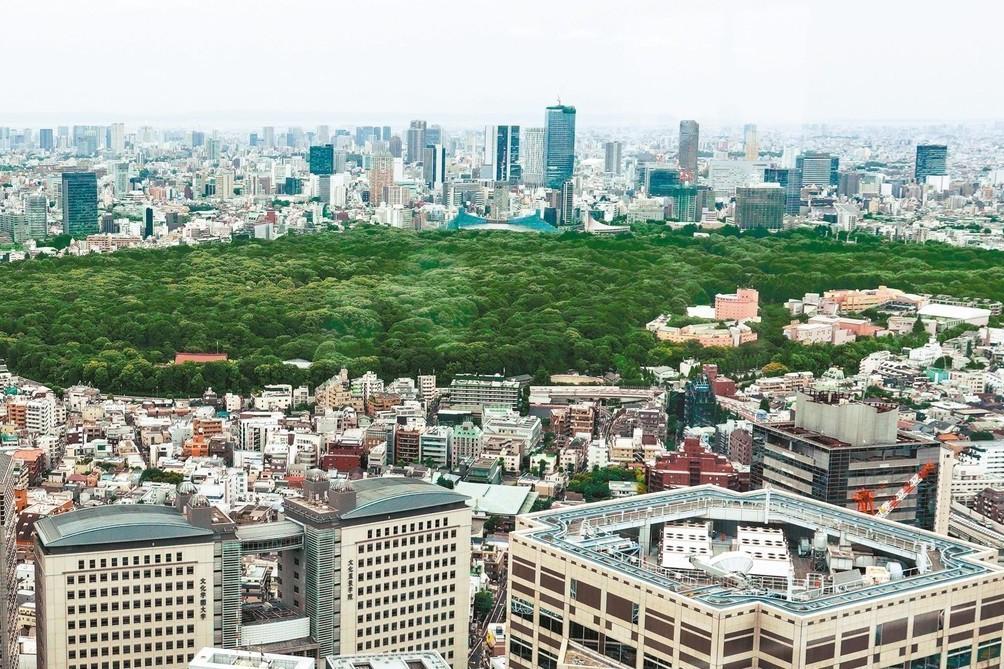 安藤忠雄揪50萬人 「種樹引風」吹涼東京
