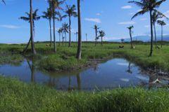 願景工程─永續能源之路3:知本濕地種電爭議