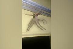 影/外星人?峇里島民宅拍到詭異觸手生物