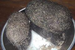 養殖場宰殺重量級母豬意外拾獲「兩顆蛋」 一查價值竟高達2000萬!