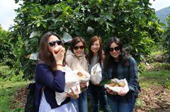 展現高雄農業軟實力 吸引香港遊客體驗農村日常