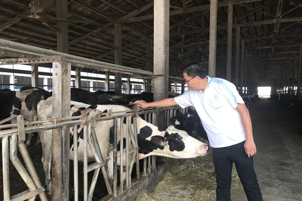 開放移工政策滿月…酪農觀望 青農盼配套
