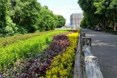 板橋環河公園旁土地綠美化 擴大綠地空間供市民休憩