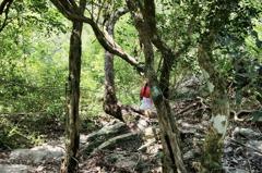 台東原鄉秘境開放!部落長輩相傳百年榕樹底下藏有黃金