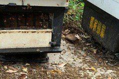 嘉義梅山500萬隻蜜蜂死亡 警方調查緝兇
