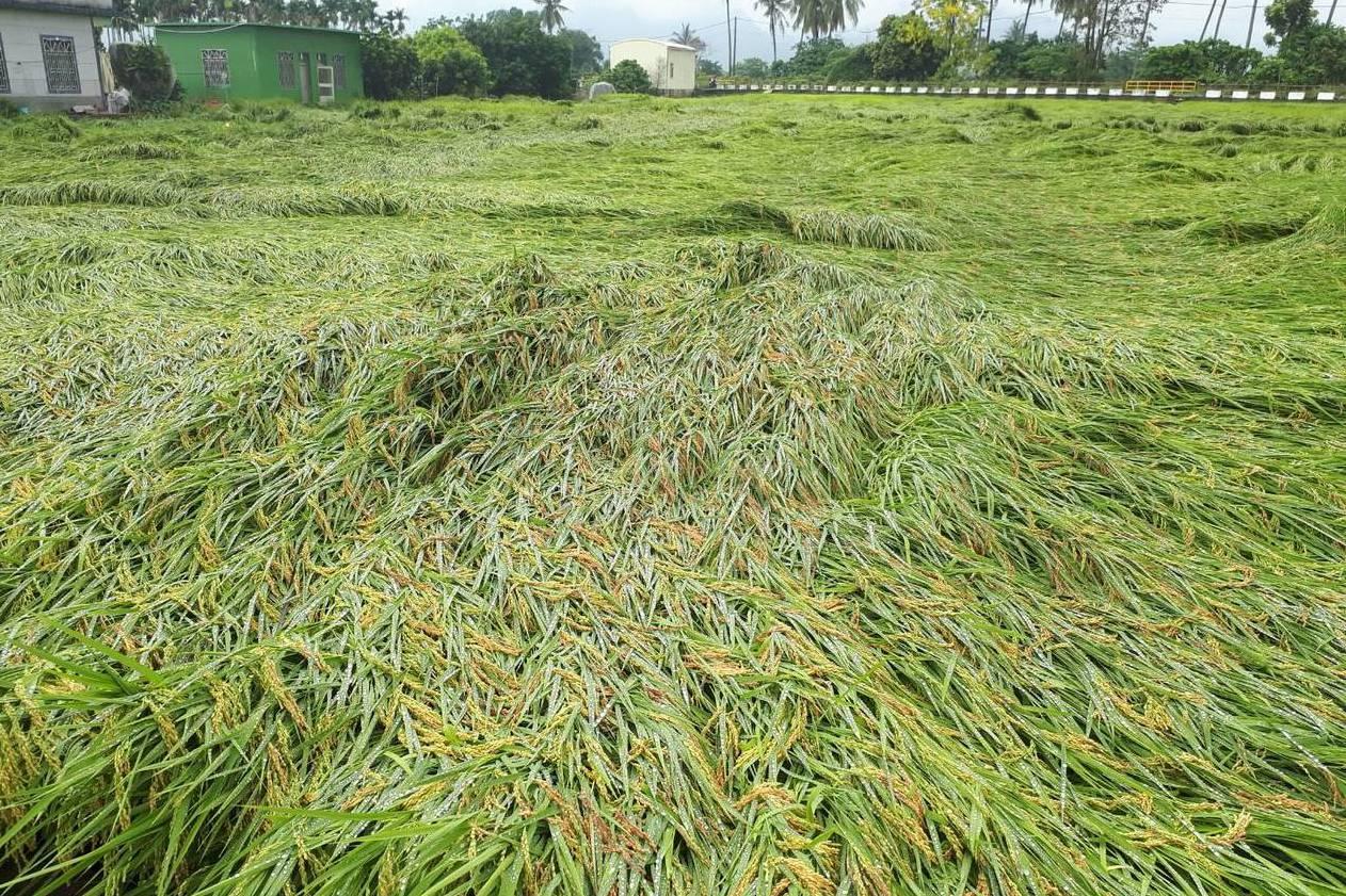 2019氣候行動峰會/學者:恢復土壤健康 種出更壯作物
