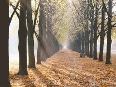 抑氣候變遷 英籲百萬人種樹