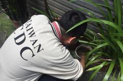 中和本土屈公病累積18例 家中養蚊最高可罰1.5萬