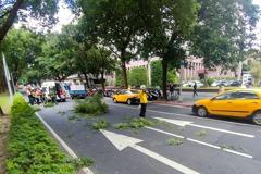 影/北市行道樹突倒塌 女騎士遭重擊鼻樑出血送醫