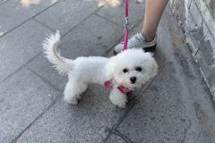 山西太原「最嚴養狗令」 狗繩太長愛犬可能被沒收