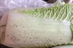 蔬果長黑點是正常還黴菌?6種常見食材一次分析