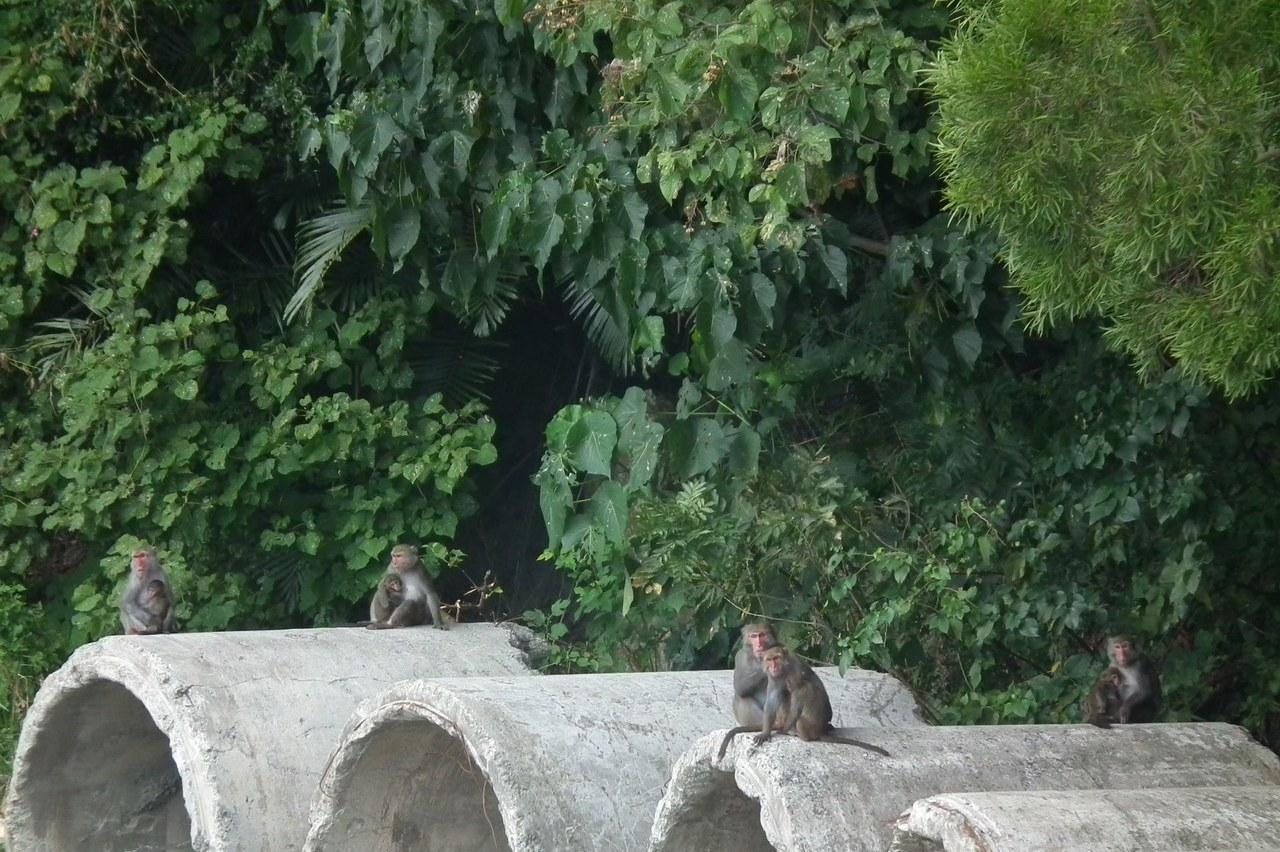 南迴舊公路不再是動物殺手 變成「動物樂園」!