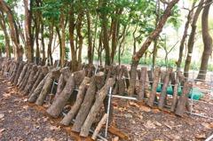 林下養蜂種香菇 北市3200公頃至今無人申請