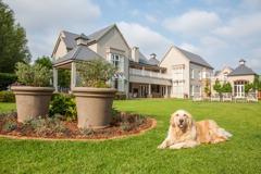 倫敦夫婦徵「狗狗照顧人」年薪百萬住豪宅 網友看法兩極