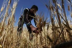 野村:糧價暴漲應不會造成經濟衰退 而是全球人道危機