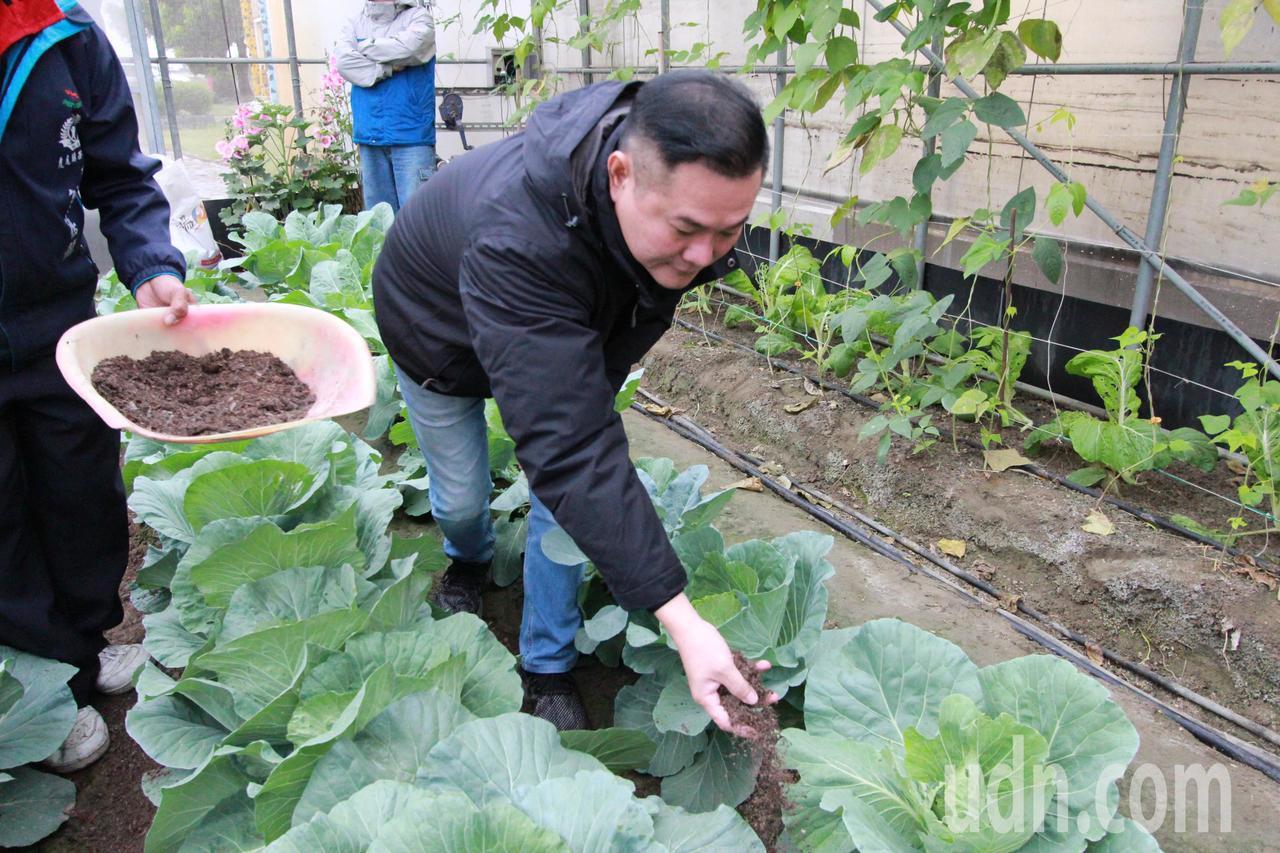 廚餘變黃金!長青菜園大豐收 雲林廚餘肥料一級棒