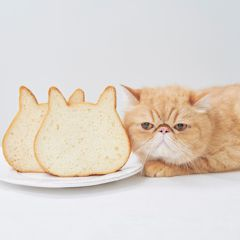 圓圓臉蛋+超萌小耳朵!日本「貓咪吐司」讓貓奴尖叫了